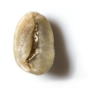 arabica3